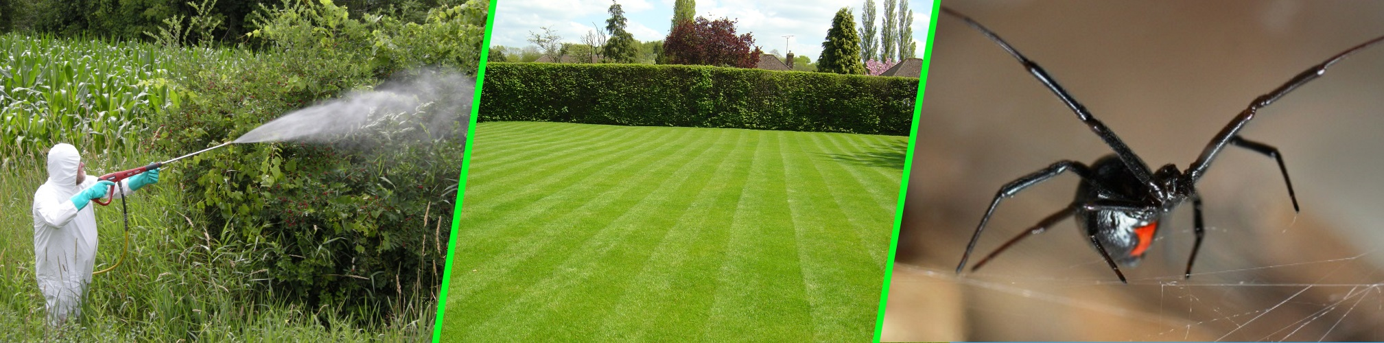We offer lawn services as well as shrub and tree pruning